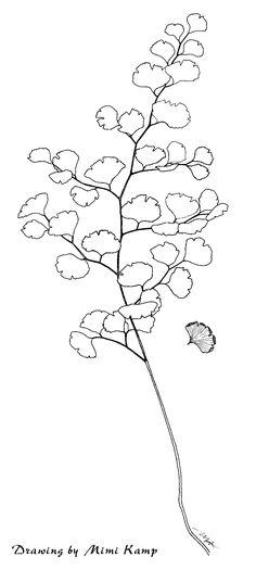 fern leaf - Google Search