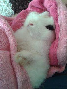 bunny having cuddles after his bath
