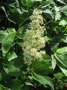 Una hierba china, tan buena para la #artritis como el fármaco tradicional. http://www.farmaciafrancesa.com/main.asp?Familia=189&Subfamilia=223&cerca=familia&pag=1
