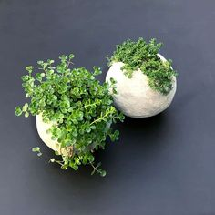 How to make really cool round ball shaped planters with cement. Mold the cement around a balloon to get the round shape. This detailed tutorial for making a DIY cement balloon planter is actually easy and so much fun! Diy Concrete Planters, Cement Art, Concrete Cement, Concrete Crafts, Concrete Garden, Diy Planters, Garden Planters, Cement Design, Plaster Crafts