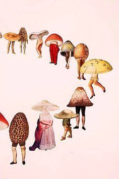 in a paralell universe mushrooms go into the forest to collect people