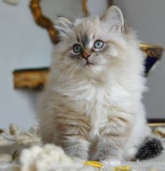 You are stealing my heart. I can't believe that I have seen at least 1,000 kittens and they never change.......they only get better. How can one kitty top the next? I don't know, but I would love to find out. OUR GOD IS AN AWESOME GOD!