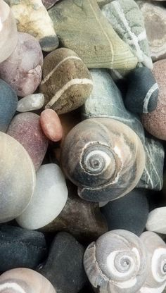 I love walking along the beach in the early am. It's the best time to look for shells and rocks