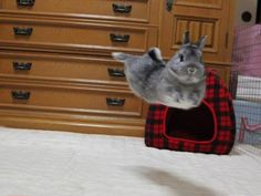 Bunnies think gravity is lame and they do what they want.