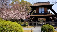 京都渉成園の傍花閣と華やかな満開の修善寺寒桜