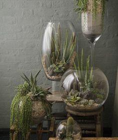 Faitesentrer la végétation dans votre habitat! Ces touches de verdure vousprocureront une sensation de bonheur et vous apporterontdes puits d'oxygène naturel. Pourquoi s'enpriver?