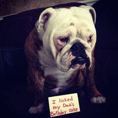 45 Ideas Birthday Quotes Funny Dog Animal Pictures For 2019 Funny Dog Captions, Funny Dogs, Cute Dogs, Funny Animals, Cute Animals, Funny Bulldog, Bulldog Pics, Funny Baby Pictures, Funny Pictures With Captions