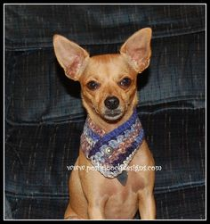 """12 Collars of Christmas Collar # 8 """"Button Dog Scarf"""" For Any size Dog, Cat or pet. We have added a Video to ..."""