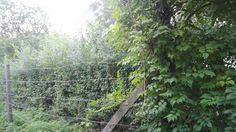 Zöldfal