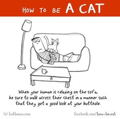 How to cat(I kept writing Hoe instead of How so I had to rewrite it 4 times. I Love Cats, Cute Cats, Funny Cats, Crazy Cat Lady, Crazy Cats, How To Cat, Cat Comics, Cat Dog, Funny Illustration
