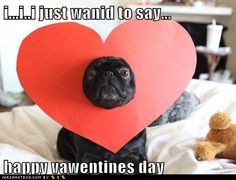 i…i..i just wanid to say… happy vawentines day  http://dogs.icanhascheezburger.com