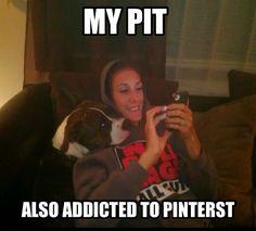 My pit. Also addicted to Pinterest!! PitBulls pit bull funny jokes Pinterest
