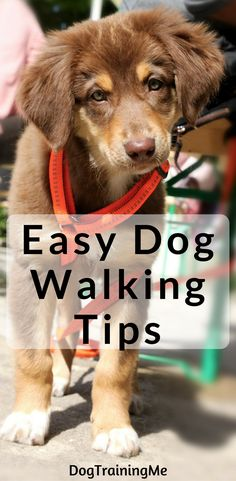 These easy dog walking tips will make your daily outing with your pup much more enjoyable. Find out the best equipment to use, how long you should walk your dog for, and the most common issue when walking your dog. Click through to read all that and more.