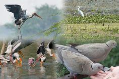 Top 20 #BirdSanctuaries in #India: #TourTravelWorld