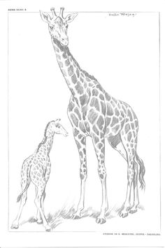 Pencil Drawings Of Animals, Art Drawings For Kids, Animal Sketches, Bird Drawings, Art Sketches, Zoo Drawing, Giraffe Drawing, Giraffe Art, Bird Outline
