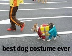 best dog costume