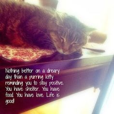 http://www.unitedstatesofmotherhood.com/2014/01/feeling-down.html  Nothing better on a dreary day than a purring kitty reminding you to stay positive. You have shelter. You have food. You have love. Life is good!
