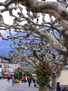 Tessin, Switzerland When it's only just starting to be spring everywhere else, it's already summer in Ticino! :)