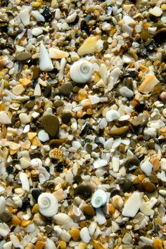 Pebbles and washed shells near Gisborne, East Coast, New Zealand. (just love walking on this type of beach. New Zealand Beach, New Zealand Travel, Beach Photography, Macro Photography, Gisborne New Zealand, Fotografia Macro, Kiwiana, The Beautiful Country, South Island