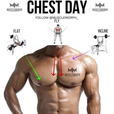 "Chest day ➖ Main chest muscle 👉🏼 Pec major 👉🏼 2 ""heads"", upper (clavicular head) and lower (sternal head). The upper head's fibres run…"