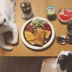 naomiuno 美味しい食パンを頂いた🍞 お父はんは先に食べて、お仕事へ♩ 美味しいパンがある時だけ朝食が食べたくなる☀︎ 世のお母さん方は、早起きしてお弁当作って朝食作って、子供に食べさし学校へ送り出し、旦那さんも送り出し…それを毎日!!本当にすごい!! そしてお母さんもお仕事してる人やったらさらにすごい!! 母に妻にお仕事までこなす、世のお母さん方は本当にすごいなぁ〜✨って思いながら朝食を頂いてます✨ #八おこめ #ねこ部 #cat #ねこ #八おこめ食べ物 #朝食 2017/08/25 10:16:37