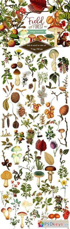 Field & Forest Vintage Botanicals #2 507270