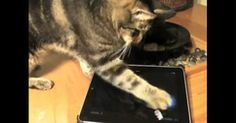 You vs. Cat: New iPad game pits humans against kitty gamers