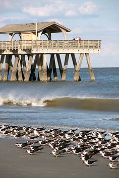 Even when the weather cools off, it's still a beautiful walk along the beach on Tybee Island.
