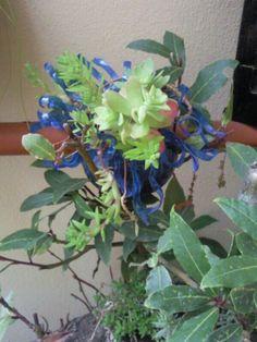 Riciclo bottiglietta di plastica blu : piccolo vaso per piantine che non gelano da mettere fra le foglie di altre piante
