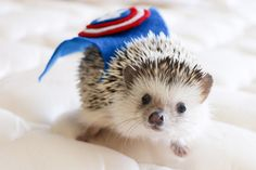 9 Reasons Why Hedgehogs May Just Be the Cutest Animals Ever | Cuteness.com
