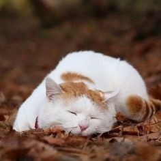 Taking a nap on Autumn leaves!