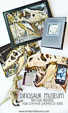 Visit the dinosaur m