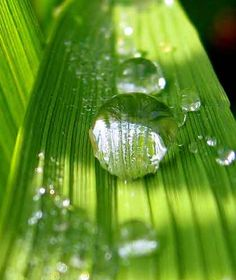 Dew drops. Now this is why I want to be a fairy.