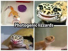 Photogenic lizards