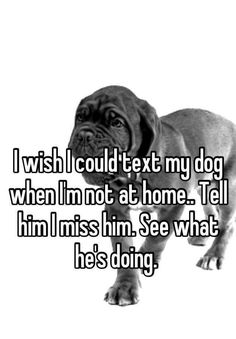 """I wish I could text my dog when I'm not at home.. Tell him I miss him. See what he's doing. """