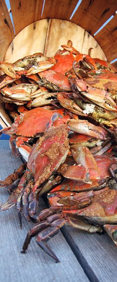 Crabs are too hard to eat but I miss the vacation we took last year to Ocean City, Maryland. Shrimp And Lobster, Crab Stuffed Shrimp, Fish And Seafood, Crab Party, Steamed Crabs, Crab Feast, Best Crabs, Crab Cakes, Ocean City
