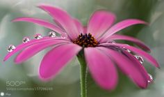 Lightly dancing by Tracy99. @go4fotos