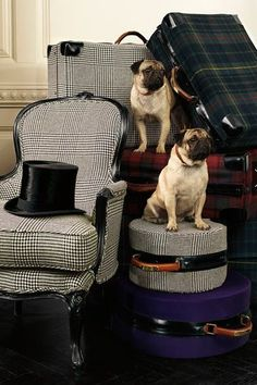 I love the menswear inspired furniture and pugs. Ralph Lauren Home Pugs, Ralph Lauren Style, Pug Love, Dog Life, Houndstooth, Cute Dogs, Decoration, Cute Animals, Puppies
