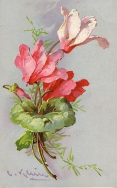 Cyclamen by Catherine Klein