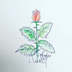 Belum mekar sudah berduri banyak#inktober #inktober2018 #inktober2018day25 #prickly #rose #iinktoberindonesia #inktoberindonesia2018 Inktober, Watercolor Tattoo, Tattoos, Plants, Instagram, Watercolor Tattoos, Irezumi, Tattoo, Planters