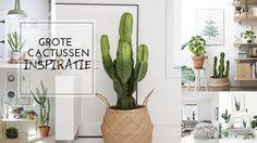 cactus in mand - Google zoeken