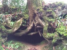 The dragons cave