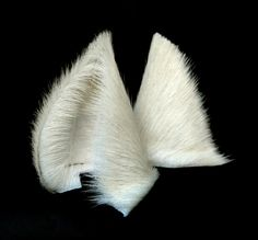 White Wolf Ears by StorytellerZero.deviantart.com on @deviantART