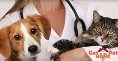 Have your pet vaccinated? Find pet clinics at your location on GetPetHome. Click here  @ http://getpethome.com/clinics #dogs #petclinic #cats