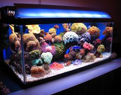 3 year old skimmerless 40G. - Reef Central Online Community