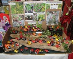 Learn about rock painting and ladybug rock art. How to paint ladybugs and ladybirds on rocks, and other ladybug rock painting ideas and tips for painted rocks. I show you how to paint rocks to look like ladybugs. These sell very well at my craft shows. Rock Crafts, Fun Crafts, Arts And Crafts, Pebble Painting, Stone Painting, Rock Painting, Pebble Art, How To Make Greetings, Ladybug Rocks