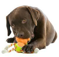 Top 25 Best Puppy Toys for Dogs that Chew Hard