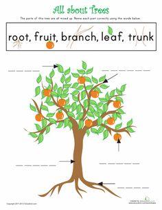 best tree unit images