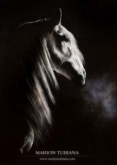 www.pegasebuzz.com   Equestrian painting : Marion Tubiana.