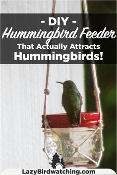 Check out the article to find out how to make your own hummingbird feeder! Hummingbird Bird Bath, Hummingbird Plants, Hummingbird Feeders Diy, Bird Bath Garden, Diy Bird Bath, Glass Garden, Hanging Bird Feeders, Diy Bird Feeder, Garden Whimsy